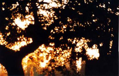 selva-incantata